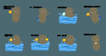 Sea otter Laco