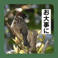動物(鳥多め)と自然のスタンプ