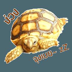 cute turtle_20200321104305