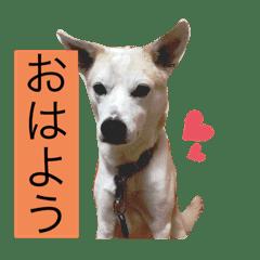 名犬ムギ2