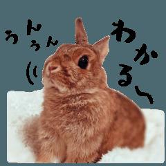 The stickers of pretty fluffy rabbits