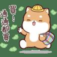 Shiba Inu PIPI's life (6)