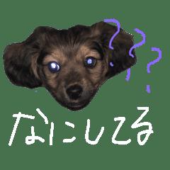愛犬『社長』のスタンプ2