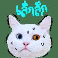 CASPER x cool cat *