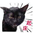 cats memes(Chinese)