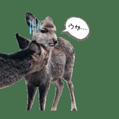 鹿(塩対応)