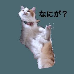 Ayano_20200319143140