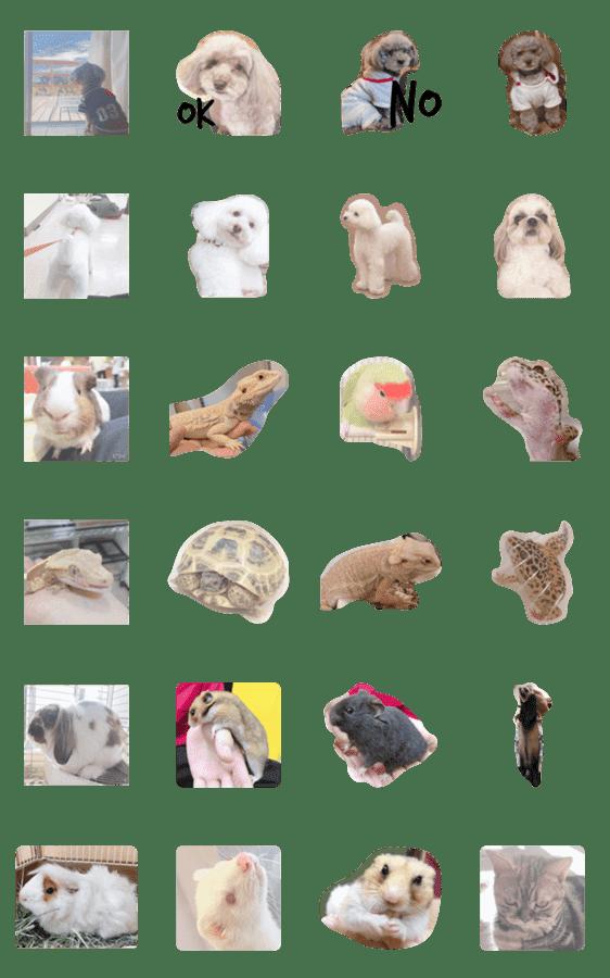 「School animals」のLINEスタンプ一覧