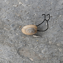 Snail shell on the ground