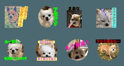 YAGASHIRA_20200320214150