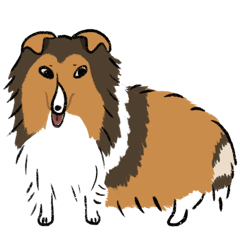 Sheltie (Shetland Sheepdog)-English vers