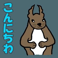 Native of Hokkaido Hanako of Squirrel