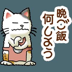 I love cats! Part28 (CAT&APRON)