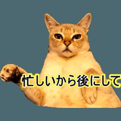Cat photo stamp Part1