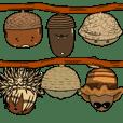 The acorn family