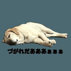 uchinoharukunnsikakatan