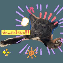 Frenzbulldog vanvan_20200325190232