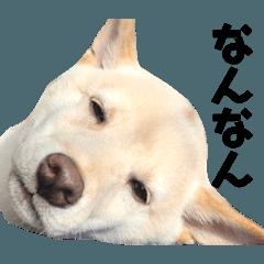 shibainu vol.2 ''ICHI RO''