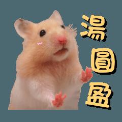 hamster tangyuan