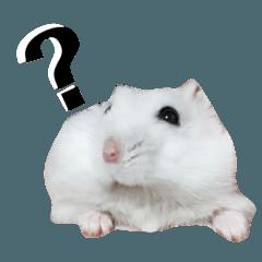 Yu_My cute Hamsters