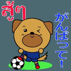 Thai Football Dog