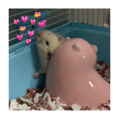 happii hamsters 1