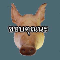 pig74