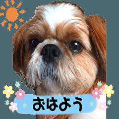 My healing dog ku-chan