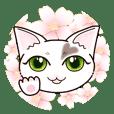 ハート猫【めいこ】の日常編