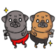 Hekomatcho of pug. Three