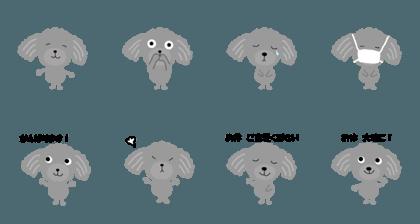 Poodle grace