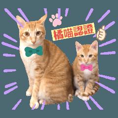 橘喵兄弟-球虎特輯