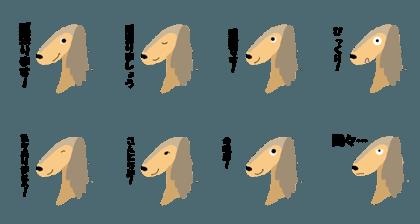 Saluki dog luke