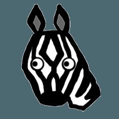 zebra shima