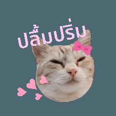 TMC Cute Cats Vol.2