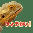 Bearded lizard daily sticker