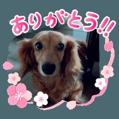 estima0403_20200327214108 dog