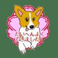 fanny dog HIROSHI