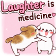Laugh and boost your immunity (dogs)
