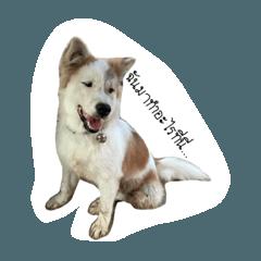 Millionaire dogg