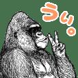 Gorilla gorilla gorilla 4