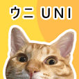 UNI is a cat 2