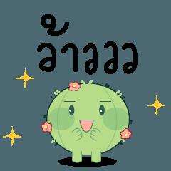 A baby cactus