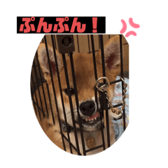 Shibainu_20200330073323