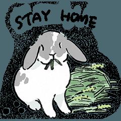 Schinako's and Bunnies Everyday English