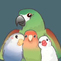 Jiu-Jiu Bird Greetings 2 (en)