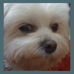 神犬咘咘狗