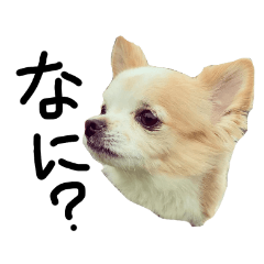 DOG Sticker WATIO season2