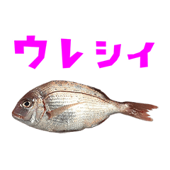 tai fish 6