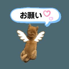 otari_shiba